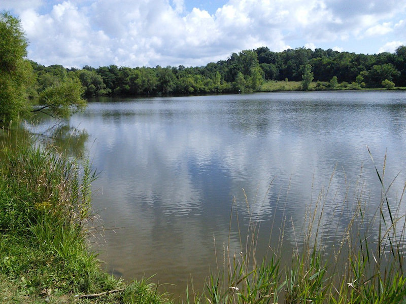 A large body of water surrounded by trees and other plants