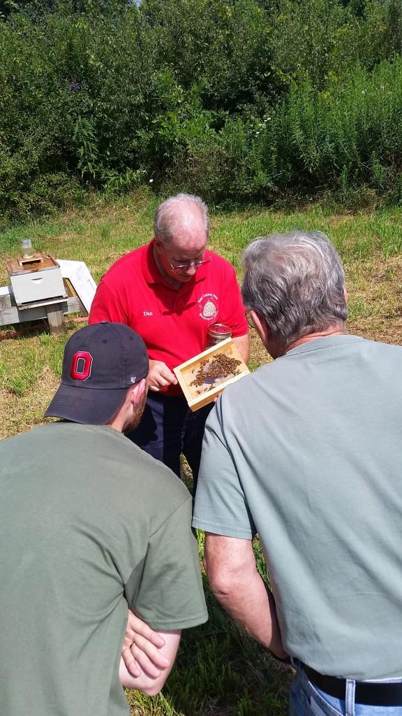 A group of people examining honeybees
